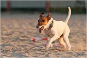 Дрессировка собак и воспитание щенков с2-3 месяцев