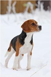Дрессировка и воспитание собак разных пород