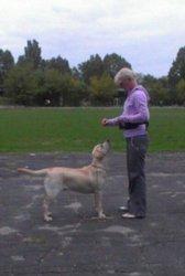 дрессировка собак и воспитание щенков  с 2-3 месяцев